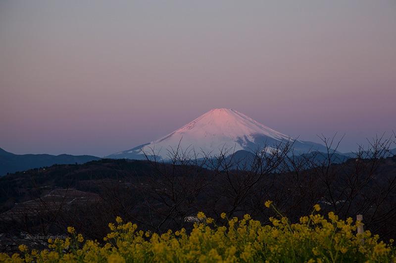 150118吾妻山富士山.jpg