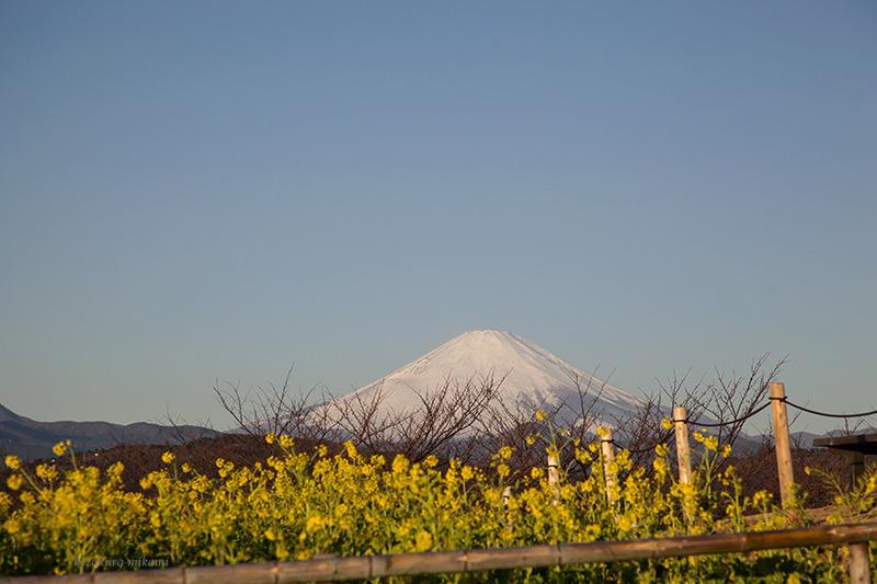 150118吾妻山富士山2.jpg
